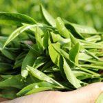 Cẩm nang làm đẹp với lá trà xanh