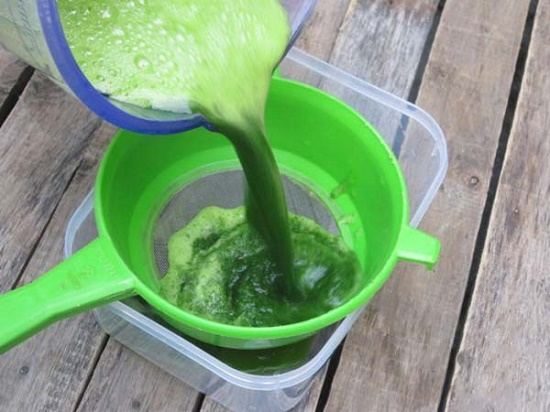 Giã nguyễn lá tía tô và lọc lấy nước, thế là bạn đã có nguyên liệu trị mụn cực hiệu quả