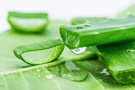 Gel nha đam có nhiều vitamin và dưỡng chất có lợi