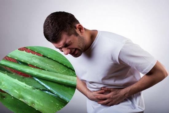 Một điều rất thú vị dành cho các bệnh nhân đau dạ dày đó là nha đam có thể hỗ trỡ điều trị viêm loét hiệu quả
