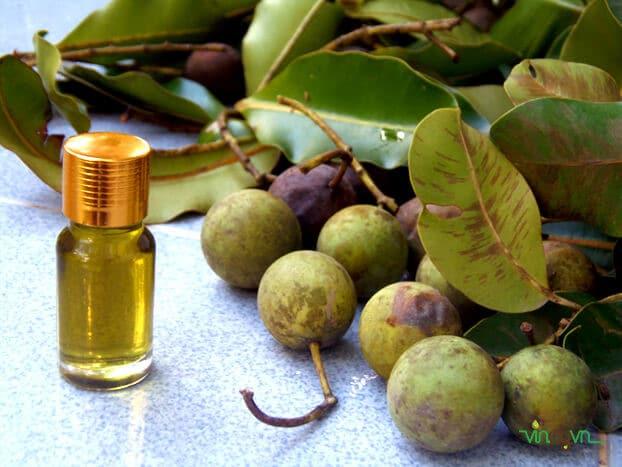 Tinh dầu mù u có chứa chất chống oxy hóa giúp kháng viêm và làm liền da hiệu quả